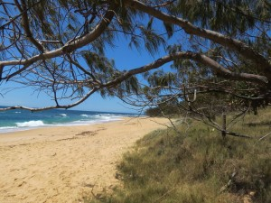 Wunderschöner Jelly-Beach
